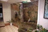 Клиника Зелёный попугай, фото №1