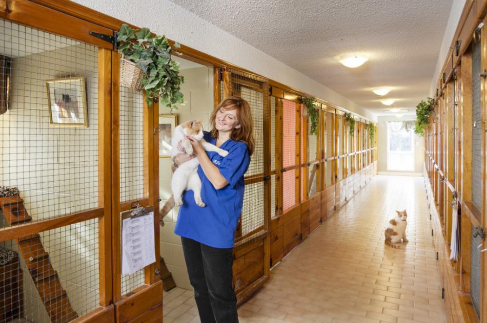 Зоогостиница отель гостиница для кошек котов и котят в