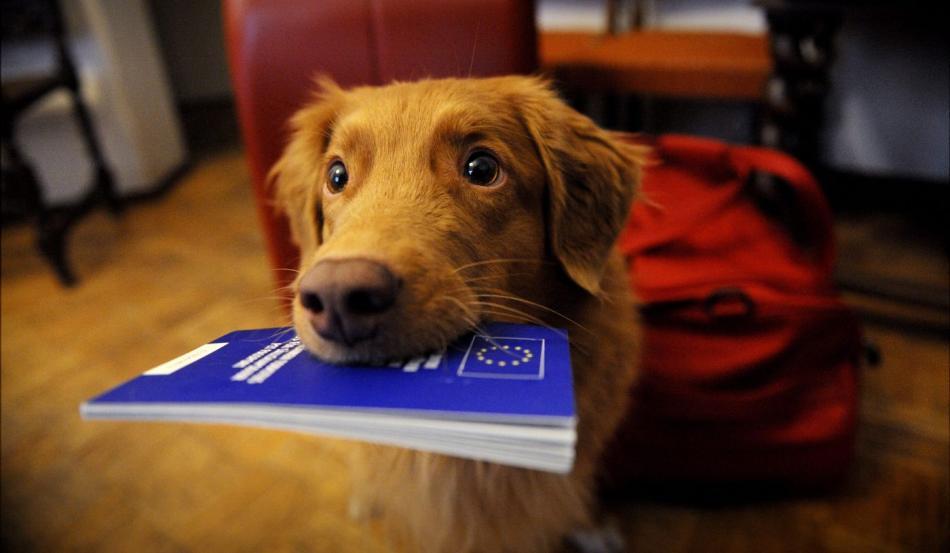 Как оформить ветеринарный паспорт для собаки?