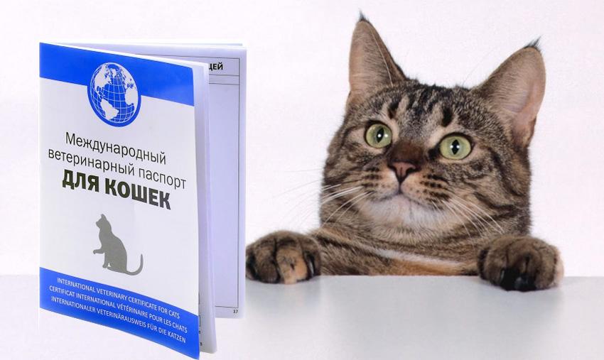 Цена оформления ветпаспорта для кошки.