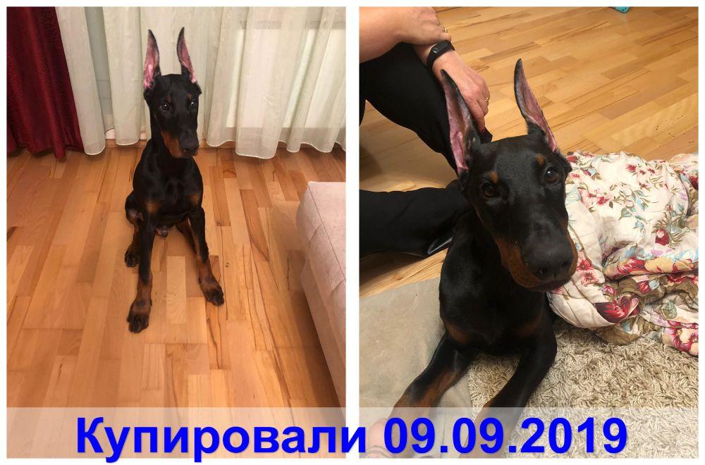 Клиника zoovet-24.ru, фото №13