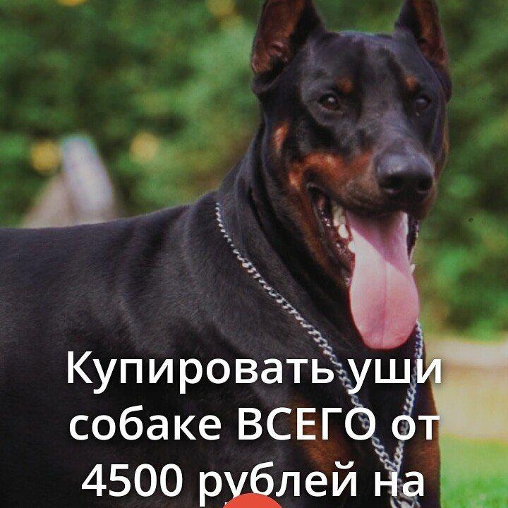 Клиника zoovet-24.ru, фото №26