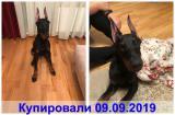 Клиника zoovet-24.ru, фото №7
