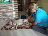 Клиника Ветеринар-Дома, фото №3